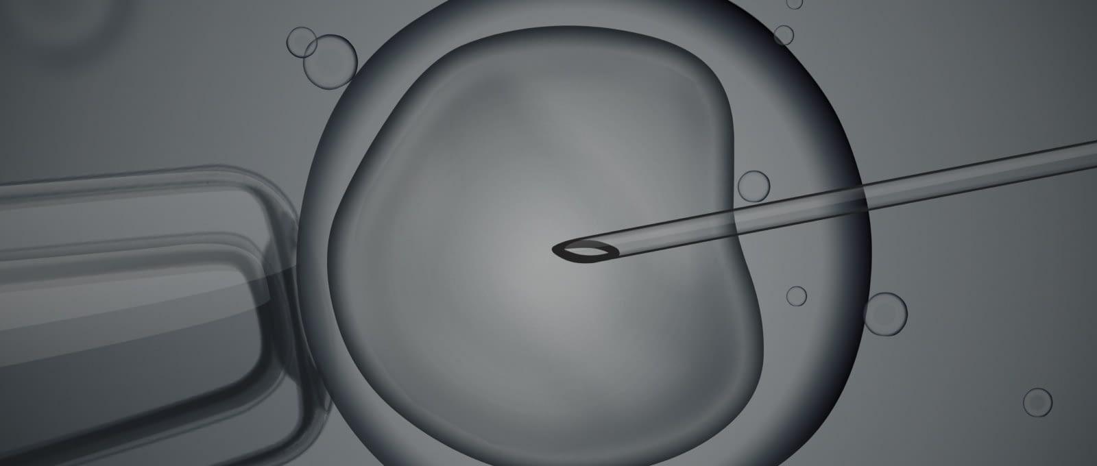 A micrograph of In Vitro Fertilization.